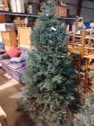 APPROX 6 FT PLUS TALL CHRISTMAS TREE WITH LIGHTS