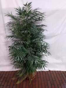 61 IN TALL ARTIFICIAL PLANT IN WOVEN BASKET