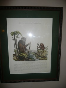 NICELY FRAMED MONKEY PRINT