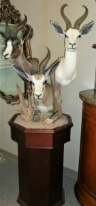 STUNNING TRIPLE PEDESTAL WHITE, BLACK AND COMMON SOUTH AFRICAN SPRINGBOK