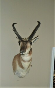 SHOULDER MOUNT PRONGHORN ANTELOPE TAXIDERMY
