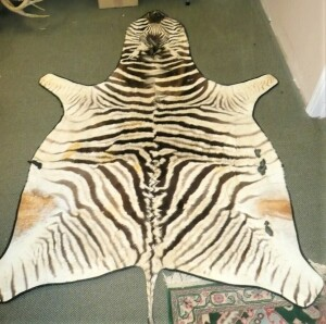 GENUINE AFRICAN TAXIDERMY ZEBRA SKIN RUG