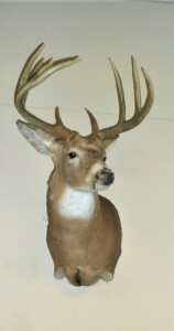 9 POINT WHITETAIL DEER WALL MOUNT