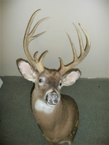 LARGE 9-POINT WHITETAIL DEER WALL MOUNT