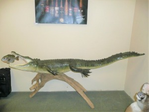 LARGE FULL BODY 8-FT 11-IN ALLIGATOR WITH BREAM IN MOUTH