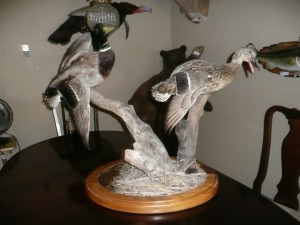 MALE AND FEMALE MALLARD TABLE TOP MOUNT